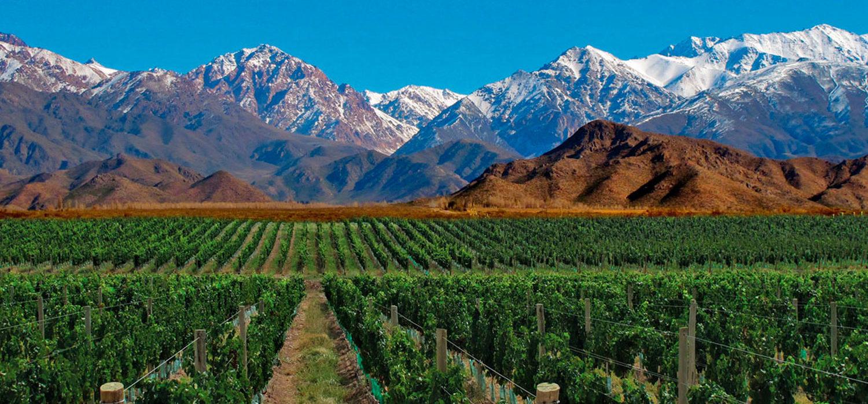 Viñas de Tupungato